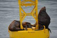 Seals on bouy