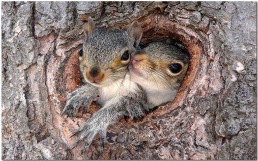 squirrel_in_nest