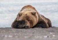 Kids can be so em-bear-essing!