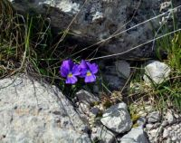 Spring on the Apennines