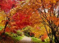 Path in Winkworth Arboretum by Margaret Anne Clarke Flickr CC