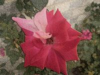 Christina's Rose