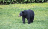 Whidbey Island's Surprise New Resident