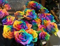 a-bunch-of-rainbow-roses
