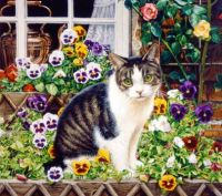Kitty in the Pansies