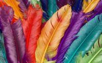 feather_colors_duvarkag_d-865972