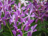 Orchid Garden, Singapore