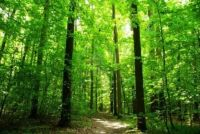International Forest Day, March 21