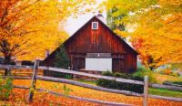 Barn Surrounded By Gold
