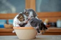 Cup-O-Kittens
