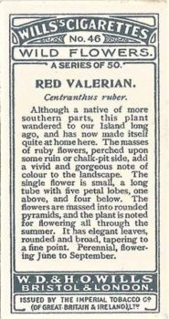 Red Valerian explanation on verse of card.