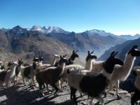 Meeting the locals, Bolivian Andes