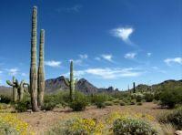 Organ Pipe Cactus NM Arizona