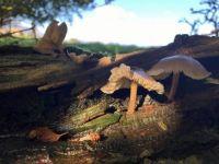 Magical Autumn Mushrooms