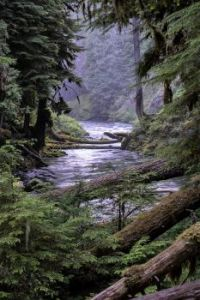Early morning on the Mckenzie River