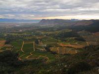 Vineyards in Constantia Valley, Cape Town