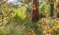 San  Andreas Trail, Palm Springs