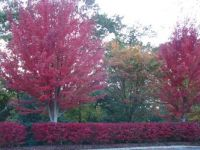Fall 2012 Asheville, NC