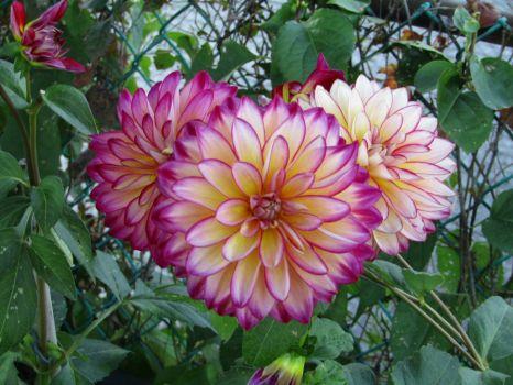 From Flower Bridge in Shelburn, MA