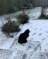 Sid in the Snow