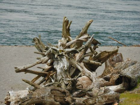 Driftwood on the Columbia