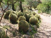 Boyce Thompson Arboretum  Superior, AZ.