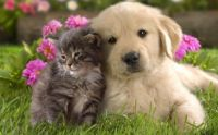 Doggy and Kitty