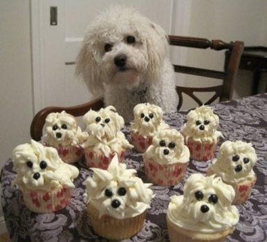 """pup cakes'"