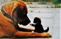 large dog, little kitten  resized