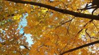 Fall Skyscape