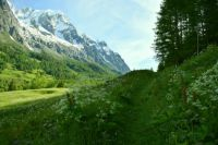 Meadows of the Val Ferret, Italy