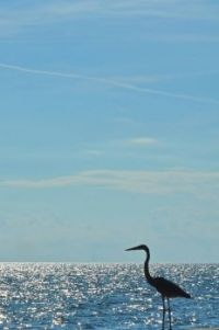 The Heron on the Gulf