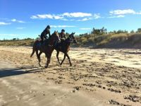Horse training on Seven  Mile Beach