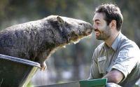 Wombat at Ballarat