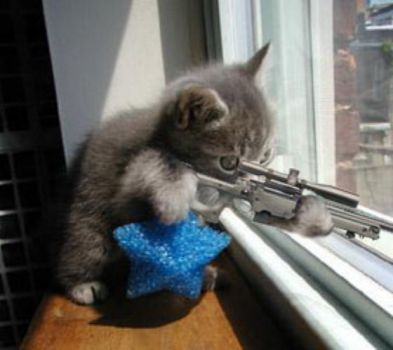 Don't Mess with Kitty!