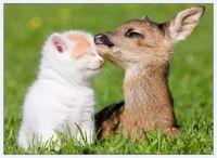 Mláďata_Young animals