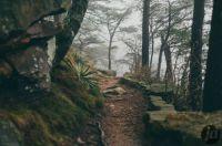 Short Walk In the Fog