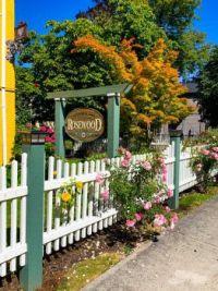 A street side rose garden in Victoria BC