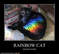 Rainbow: Cat Taste Like Chocolate