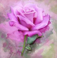 Rose paint