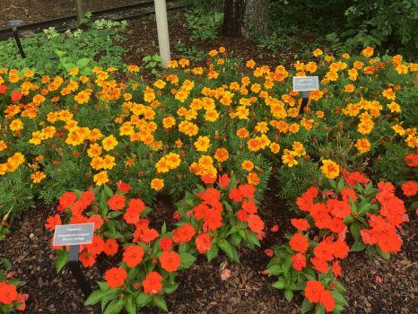 cincy zoo flowers