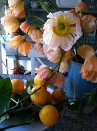 Poppies and oranges.