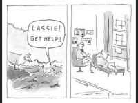 Lassie gets it wrong