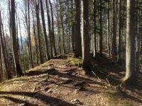 Herbstlicher Bergwald