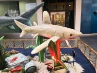 Shark exhibition in a shopping center
