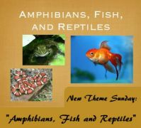 "New Theme Sunday: ""Fish, Amphibians & Reptiles"""