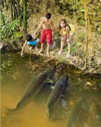 Amazon Forest Fish Playing With Kids