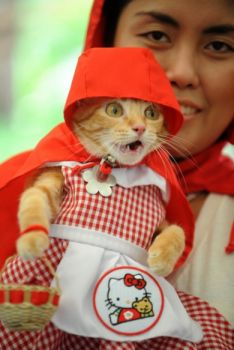 Little Red Riding Hood ?