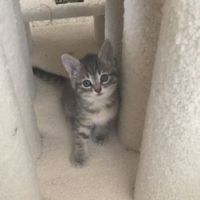 This is one of the Baby Kitties we Rescued on July 4, 2016, taken on: July 4, 2016