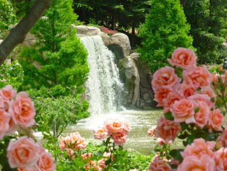 pink roses and a waterfall!!!